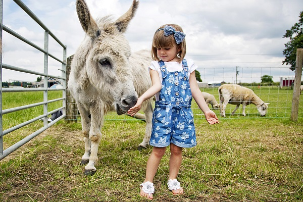 Zoo and Animal farms in Derby
