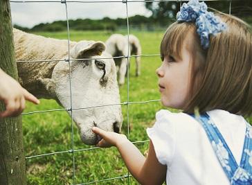 Bluebell Dairy Farm in Derby